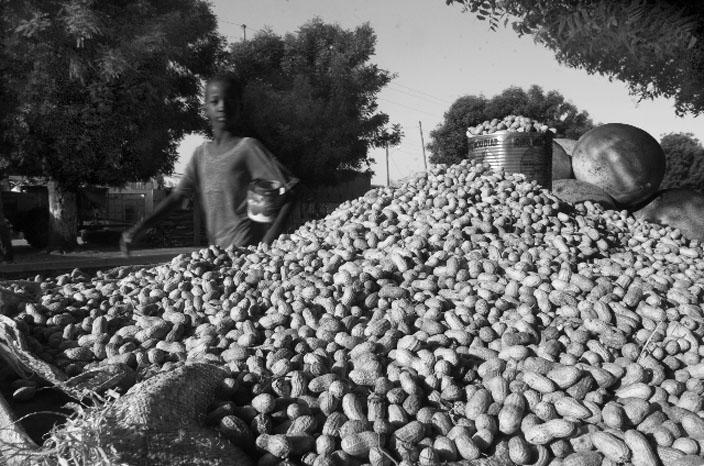 Culture de l'arachide - NDiouckhfissel, commune de Sandiara © Macline Hien