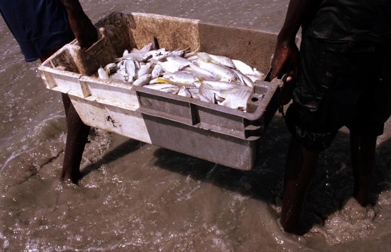Le poisson est transporté dans des caisses rectangulaires © Emmanuel Bakary Daou