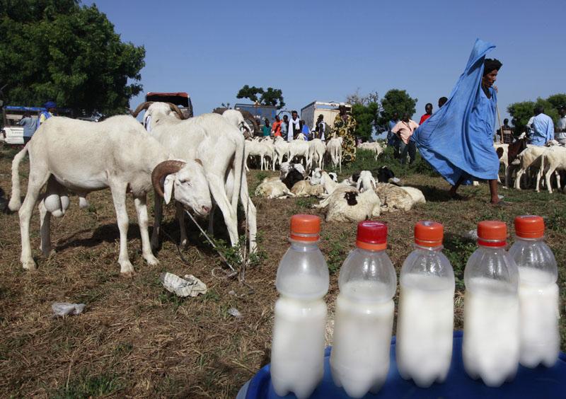 Une vue de l'ambiance au marché de bétails de M'Bour, Sénégal le 23 Octobre 2010 © Thierry Gouegnon