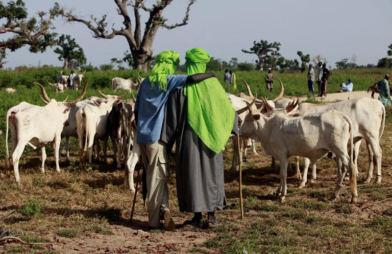 Deux bergers devant leurs bétails au marché de bétails de M'Bour, Sénégal le 23 Octobre 2010. © Thierry Gouegnon