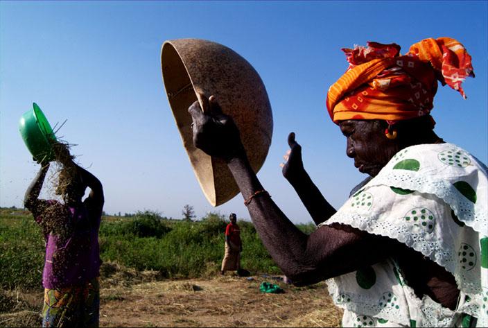 Le Riz au Mali - Bâ Awa, âgée de 71 ans, très due dans cette activité, donne un coup de main aux femmes de ses fils. Niono. Mali 2010 © Amadou Keita