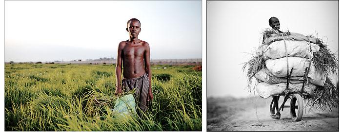 """D'une lignée de pasteurs nomades somalis transhumant entre Djibouti et l'Ethiopie, Youssouf s'est mis en quête très tôt de possibilités pour subvenir un peu mieux aux besoins de sa famille. Pour lui, le respect des anciens et la solidarité font partie des valeurs sacrées : """"A quoi sers-tu si tu n'aides pas tes parents ?""""  D'ici une année, ces prairies n'existeront plus. La construction d'une nouvelle station d'épuration va condamner définitivement cette bouche d'évacuation des eaux usées de la ville. Youssouf et ses amis moissonneurs devront chercher un autre lieu ou une autre activité pour subsister. © Emmanuel Martin"""