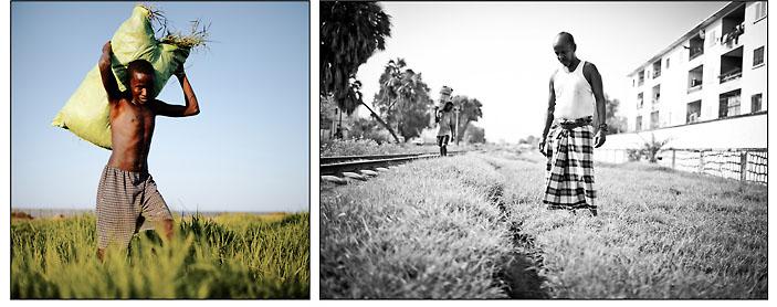 Photo noir et blanc de droite  Alors que Djibouti est considéré comme une terre aux conditions climatiques extrêmes où rien ne pousse, l'imagination, l'ingéniosité et le travail de quelques uns, permettent, grâce à un système d'irrigation de fortune utilisant les eaux usées, de faire naître des prairies urbaines, comme ici en plein centre ville de la capitale, enclavées entre la voie ferrée et les habitations. La rencontre avec Ali, ci-dessus, djiboutien, qui a créé son propre système d'irrigation avec les eaux usées des bâtiments d'habitation, nous mets sur la pistes d'autres prairies situées dans les zones péri-urbaines. © Emmanuel Martin