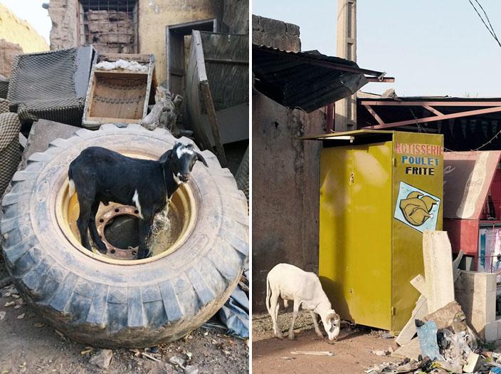 (à gauche) La chèvre pneumatique / (à droite) Le Menu du jour © Sophia Baraket