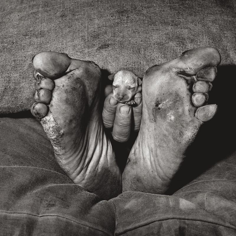 Puppy between feet (Chiot entre des piers), 1999 © Roger Ballen